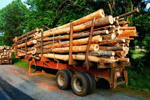 Hauling wood.JPG